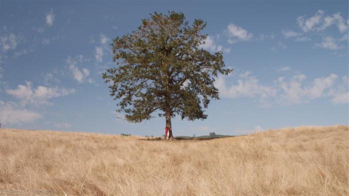 Pohon rindang merindu