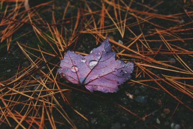 Obrolin Monthly challenge - Cinlok - Cinta yang tak dirindukan